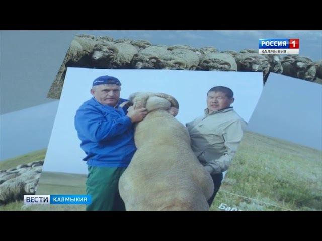 В Калмыкии зарегистрирована новая порода овец