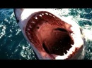 TIBURON CONTRA ORCA