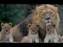 В мире животных Поль Мориа! Красивая музыка для души и видео!