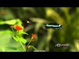 G.E.N.E. - Forest Love