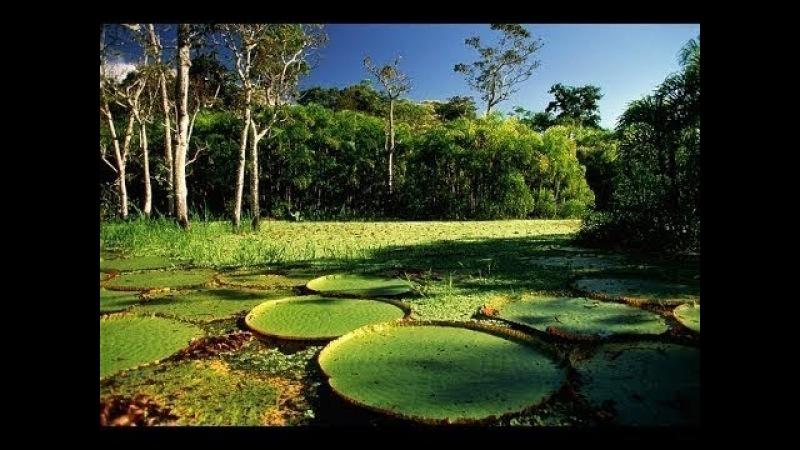 Перу́ - Путешествие по реке Амазонка. Документальный фильм