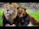 Дикий мир животных. Странная дружба. Документальный фильм.