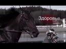 Корма для лошадей Рейсинг отличное решение от Суомен Реху