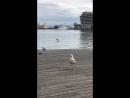 Белая чайка белая ворона