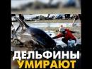 Дельфины умирают