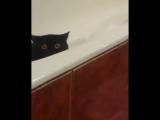 Кот скрылся в ванной с ворованной рыбой