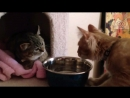 Cмешные приколы с животными и про животных. Прикольные собаки и кошки