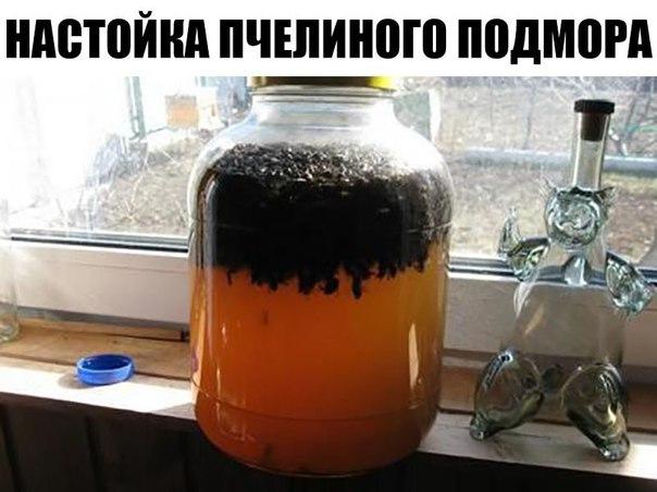 Рецепт лечения простатита пчелиным подмором