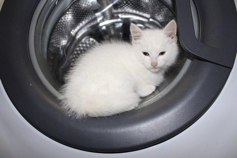 Разместите пожалуйста. Котёнок мальчик ищет дом! Примерно 2 месяца, от паразитов...