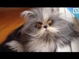 Безумно грозный кот