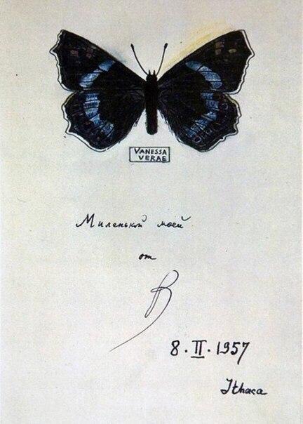 Бабочки, нарисованные Набоковым для жены. 698MZALYYd4