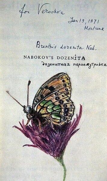 Бабочки, нарисованные Набоковым для жены. R-uZviQnLmQ