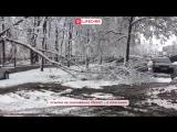 В Воронеже из-за снегопада падают деревья