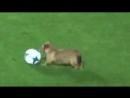 Весёлая собачка