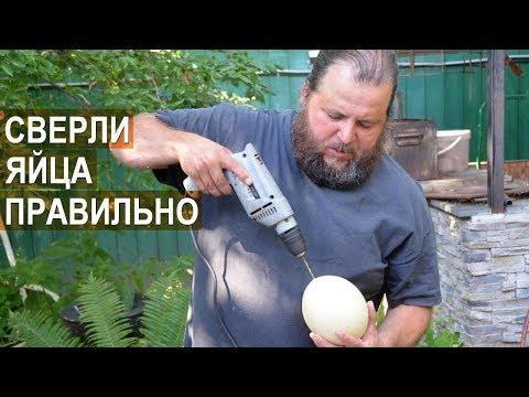 Как извлечь содержимое страусиного яйца и не повредить скорлупу. Птицевод Валентин Сохорев