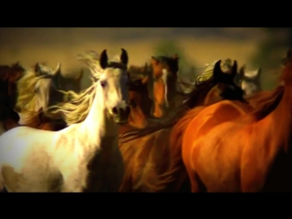 Лошадки ...
