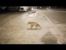 Встретили лису
