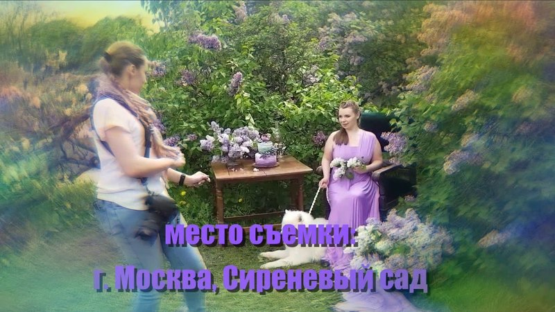 Сиреневый сад Фотопроект в цветущем саду Самоед для съемок