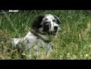 Введение в собаковедение Серия №18