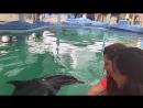 Melka dolphins Lovina
