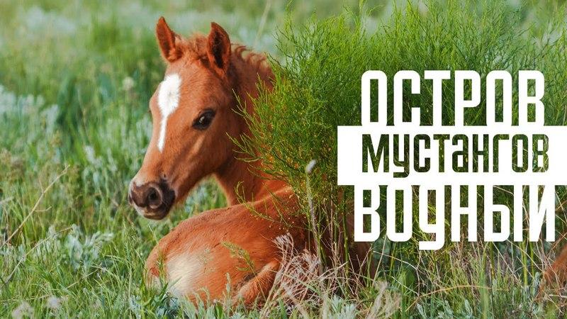 Остров Водный - территория мустангов | Дикие лошади озера Маныч-Гудило