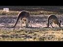 Планета мутантов Австралии Animal Planet Документальные фильмы о животных