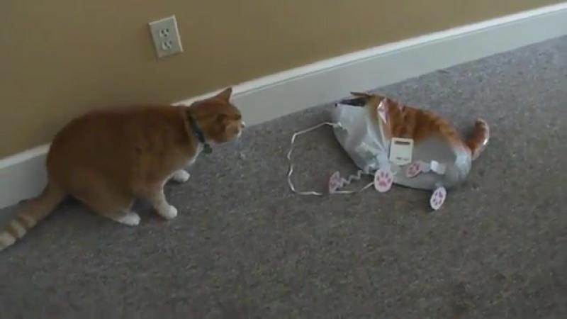 Кото-клон (смешное, кошки, кот, прикол, кошка, атак, юмор, хорошее настроение, видео о котах, домашнее животное, уютное, хищник)