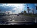 Подборка животных на дороге