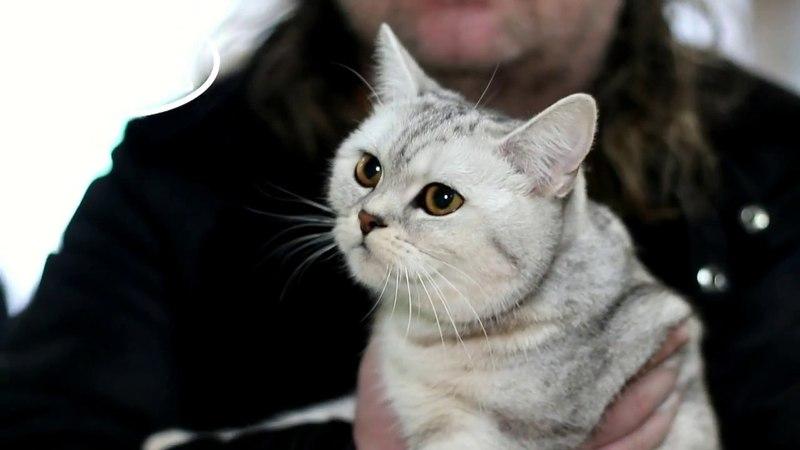 Клип №0731 - выставка кошек PCA online
