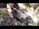 Собака лежала в горе мусора с огромной раной