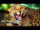 Леопарды которые охотятся на людей. В поисках опасных людоедов
