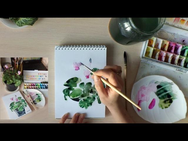 Скетч акварелью с натуры Цикламен Watercolor sketch