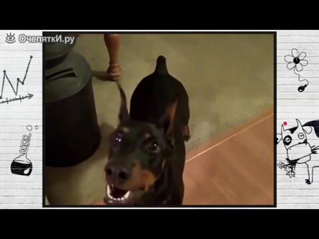 Собака собирается на дачу