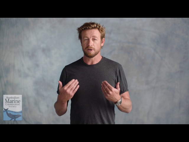 So reckless, its terrifying - Simon Baker asks you to Fight For Our Reef