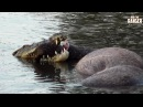 Incredible Strength Of A Crocodile Introduced By Liaan Lategan