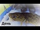 Зимняя ночная рыбалка на налима декабрь 2017 / день / Winter night fishing for burbot December 2017