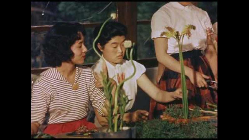 Hiroshi Teshigahara - Ikebana 1956 VOS Documentary