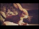 DONOTS - Eine letzte letzte Runde (Official Video)