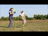 Работа на семинаре по фризби-фристайлу - австралийская овчарка Персик часть 1
