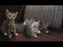 Новая жизнь. Четыре выживших котёнка.