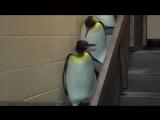 Звездные войны пингвинов