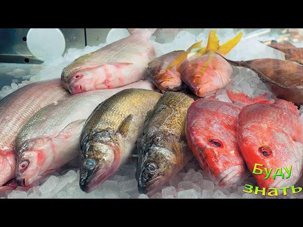 Как выбрать свежую рыбу - Посмотрите ей в ГЛАЗА!