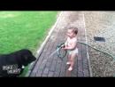 Милота Малыш играет с собачками