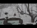 Веселые мишки радуются снегу в Ереване