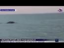 Крымский Карадагский Змей