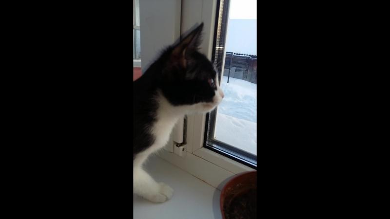 Наша кошечка Шпуля Я первый раз за всю свою жизнь вижу как кошки таким способом зляться или пугают птичек😂