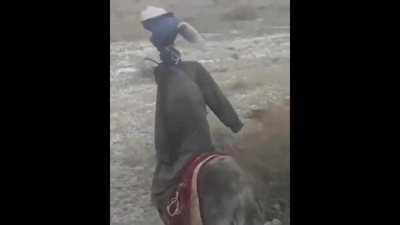 Чучело пастух 😀