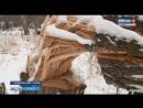 В Кемеровском районе борются с черными лесорубами