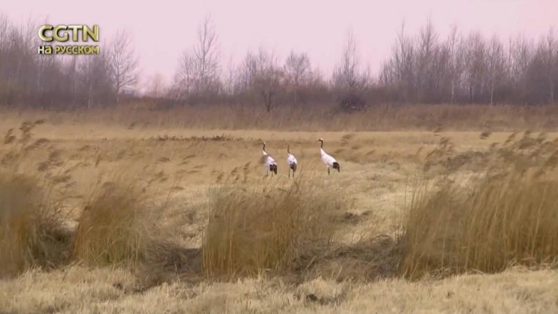 Будьте_как_дома Озера Ханка встречает перелётных птиц