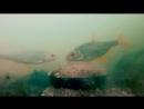 Геркулес со Жмыхом Осенью. Подводная Съёмка Прикормки. Реакция Плотвы